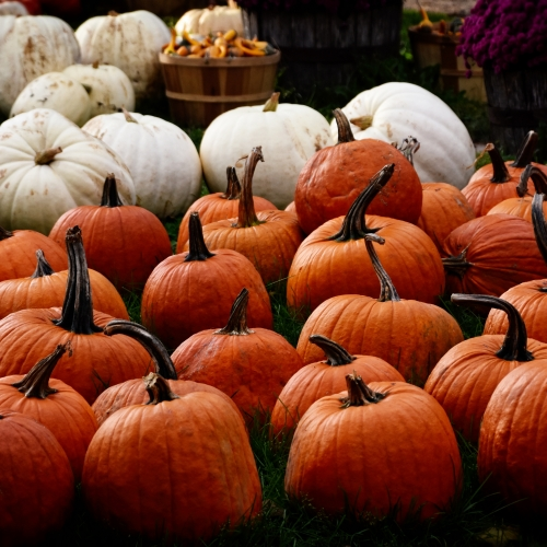 Marlow's Pumpkin Patch Annual Fall Fest
