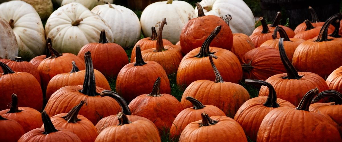 Marlow's Pumpkin Patch 8th Annual Fall Fest